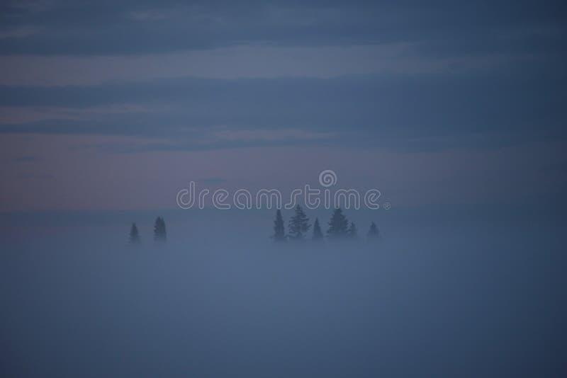 Niebla de medianoche imagen de archivo