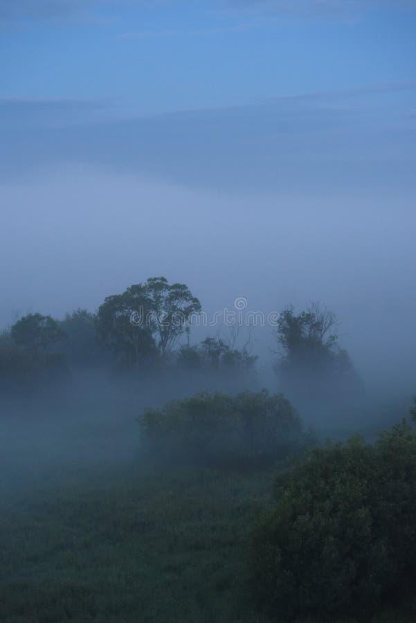 Niebla de medianoche fotos de archivo
