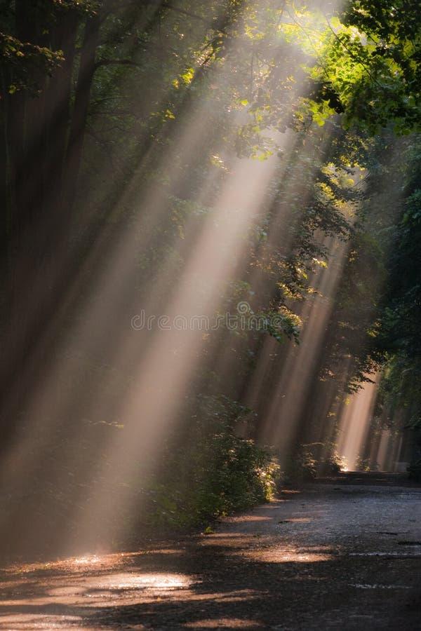 Niebla de Sun en bosque imagenes de archivo