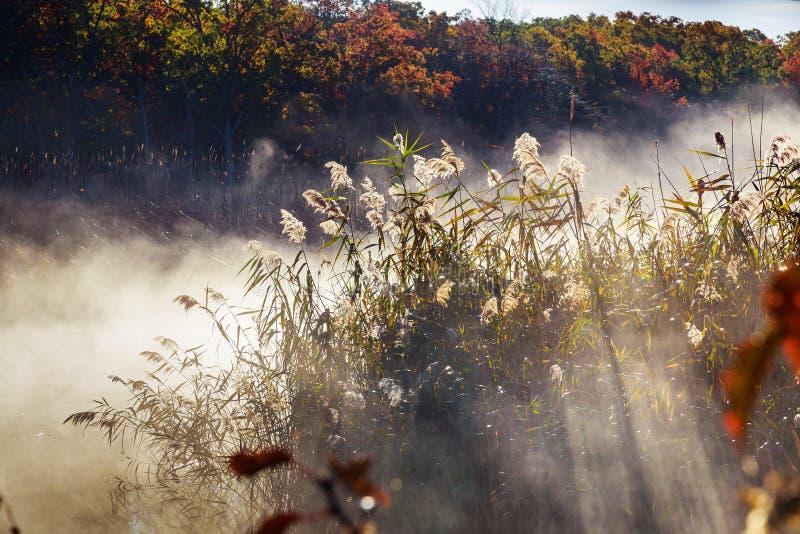Niebla del otoño en una selva tropical imagenes de archivo