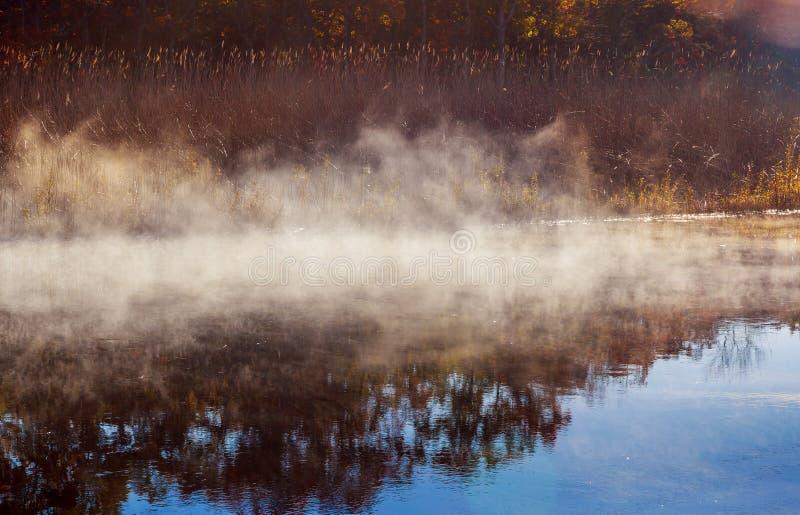 Niebla del otoño en una selva tropical fotografía de archivo libre de regalías