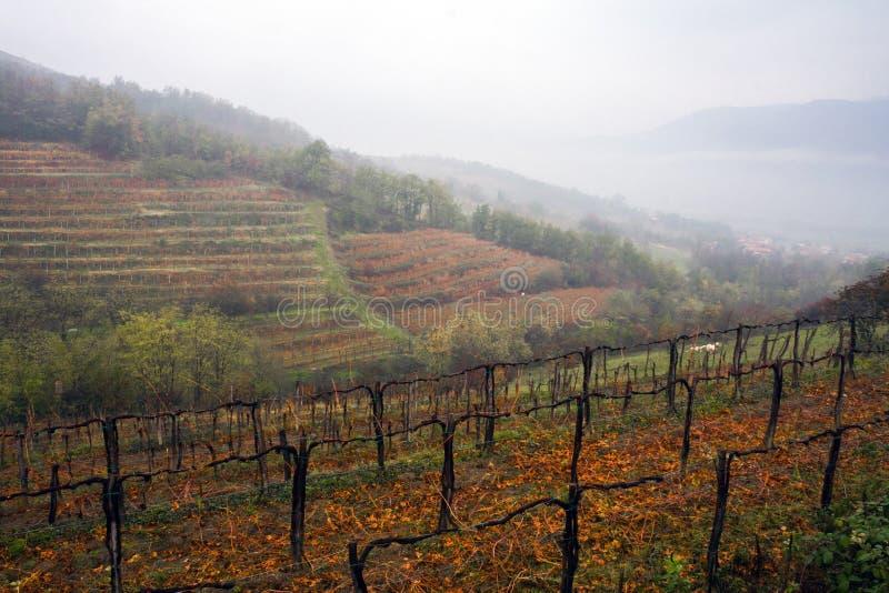Niebla del otoño en viñedo alpino fotos de archivo libres de regalías
