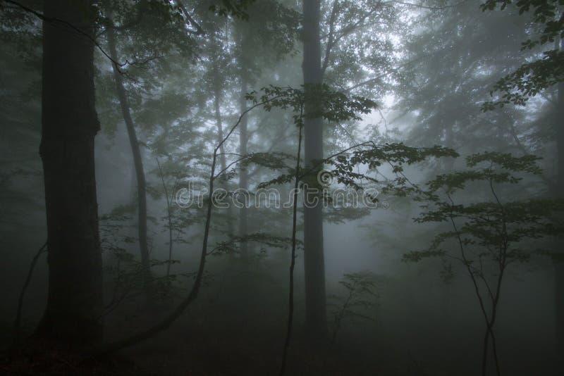 Niebla densa en la madera de haya imagen de archivo libre de regalías