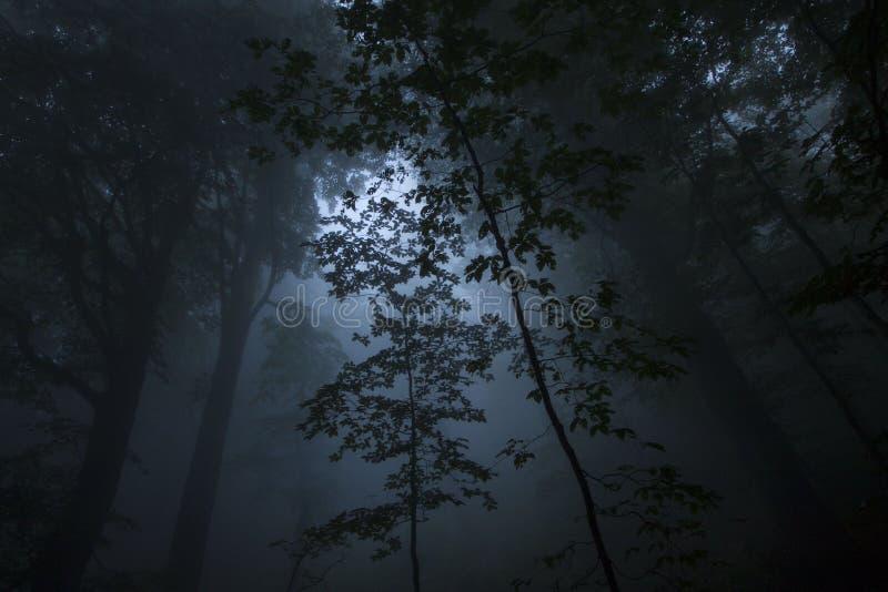 Niebla densa en la madera de haya imagenes de archivo