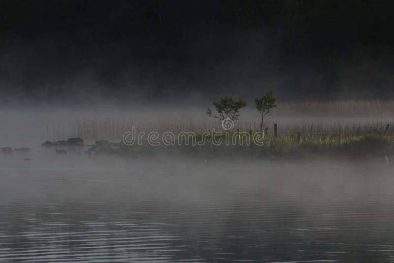 Niebla dominante del lago foto de archivo