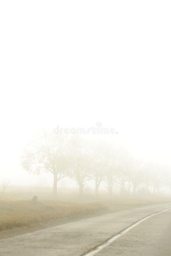 Niebla dura en el camino fotografía de archivo libre de regalías