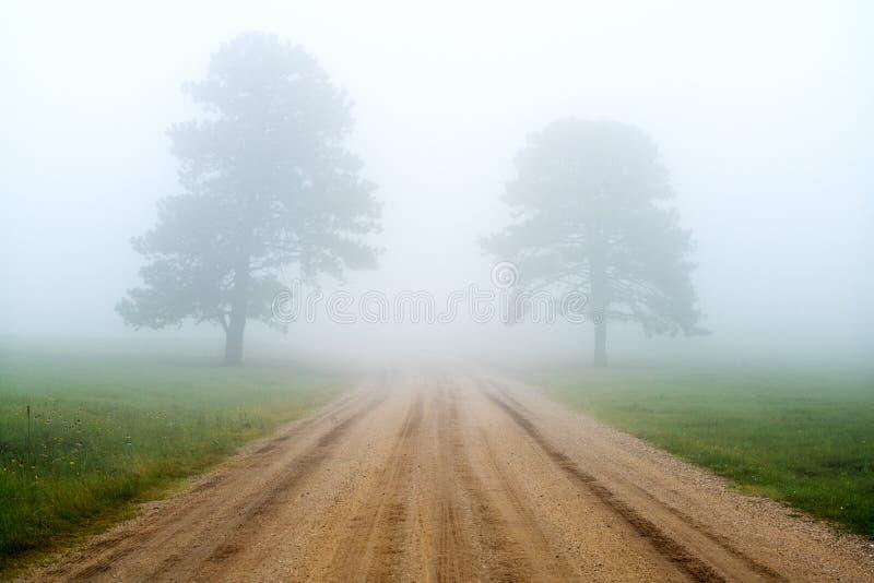 Niebla en Black Hills Dakota del Sur imagen de archivo