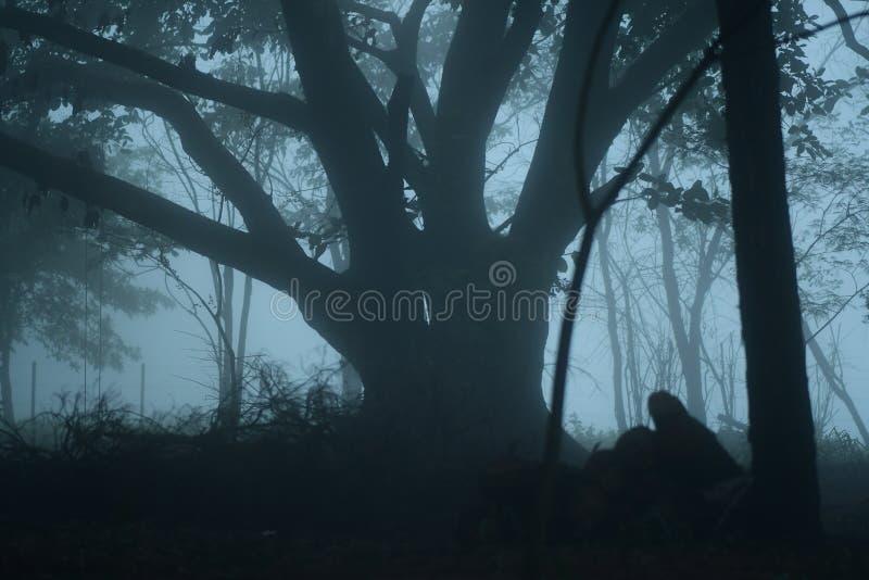 Niebla en el bosque fotografía de archivo libre de regalías