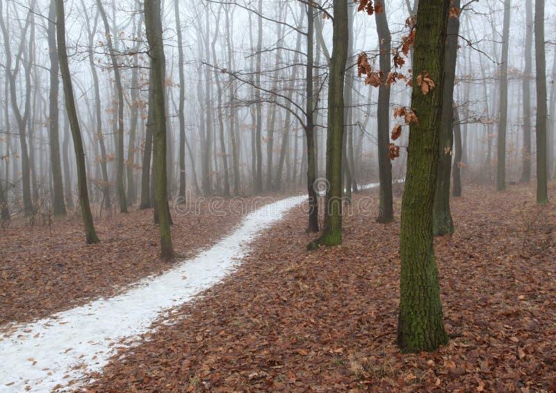 Niebla en el bosque fotos de archivo libres de regalías