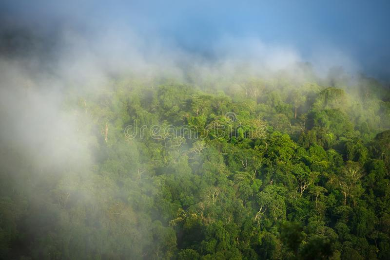 Niebla en el bosque y las montañas fotos de archivo