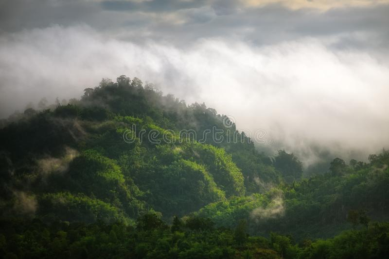 Niebla en el bosque y las montañas foto de archivo libre de regalías