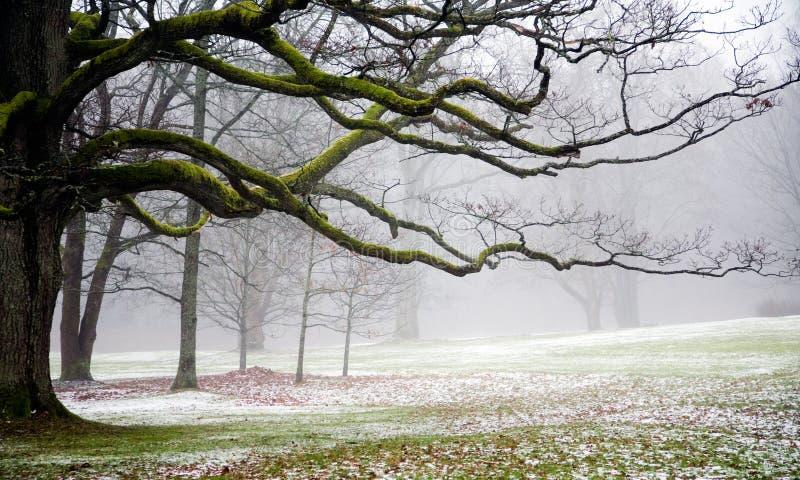Niebla en el parque foto de archivo