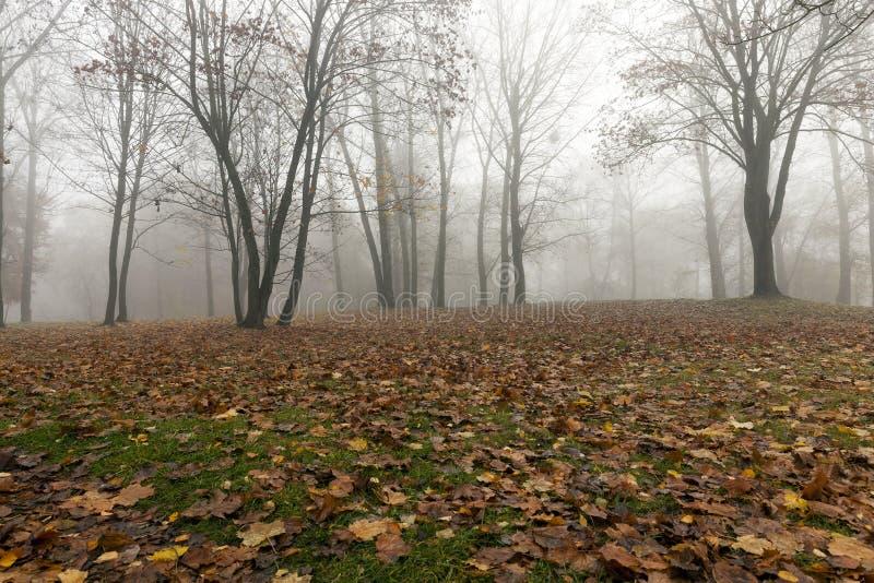 Niebla en la estación del otoño imagen de archivo libre de regalías