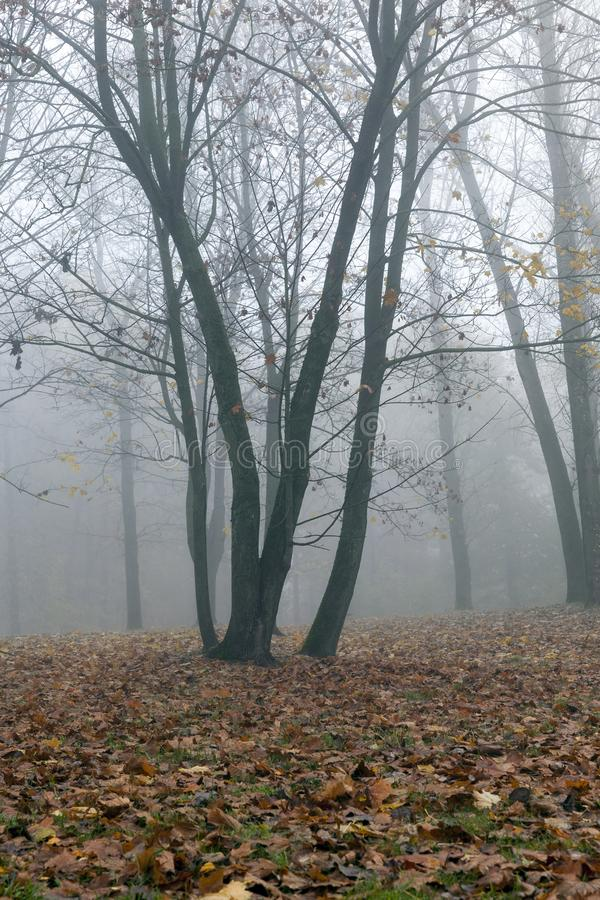 Niebla en la estación del otoño foto de archivo libre de regalías