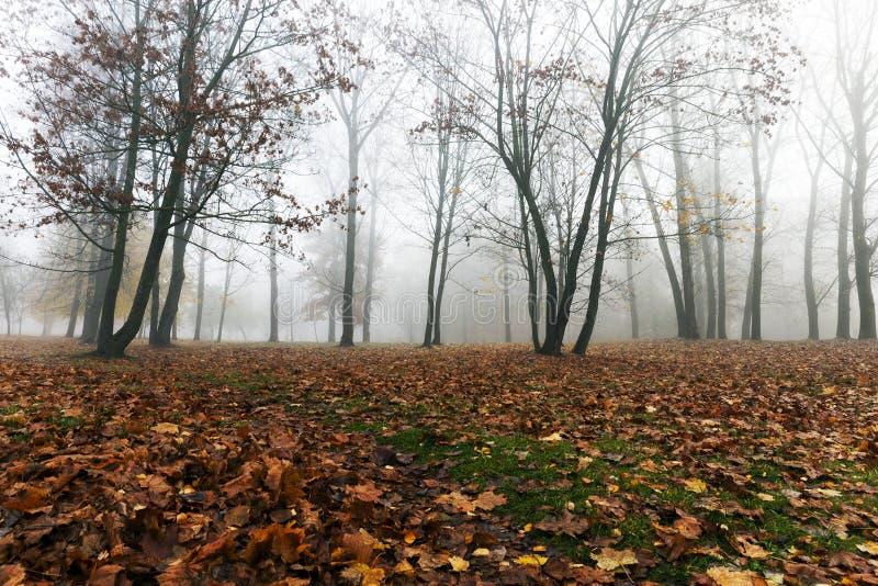 Niebla en la estación del otoño imágenes de archivo libres de regalías