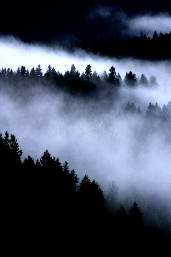 Niebla en los árboles fotografía de archivo