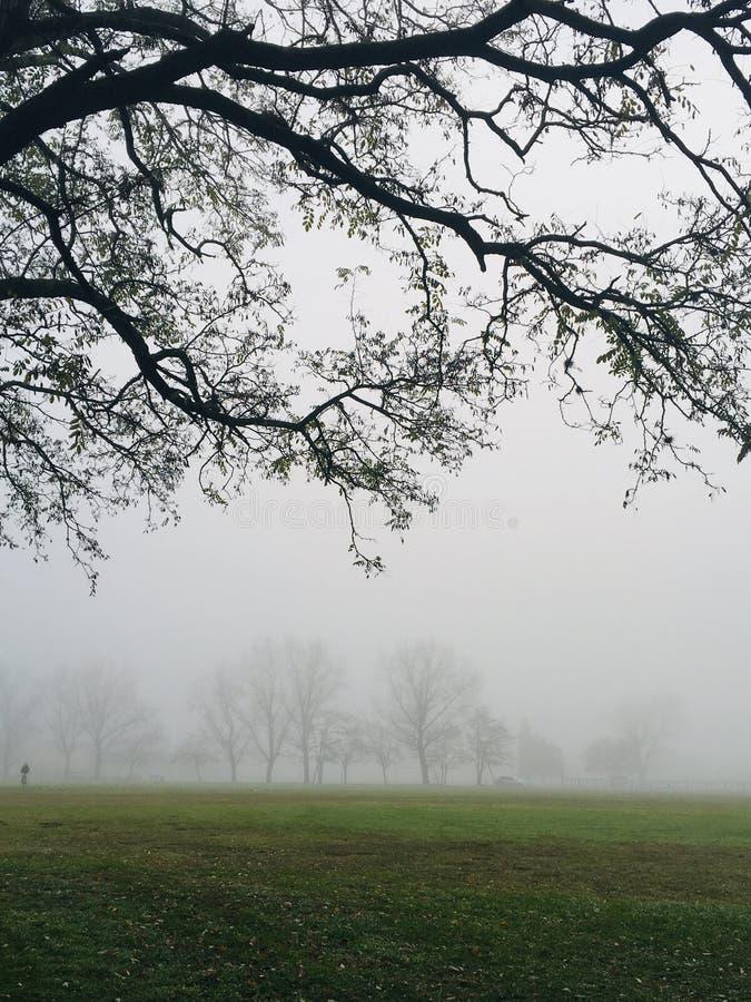 Niebla en los campos imagen de archivo