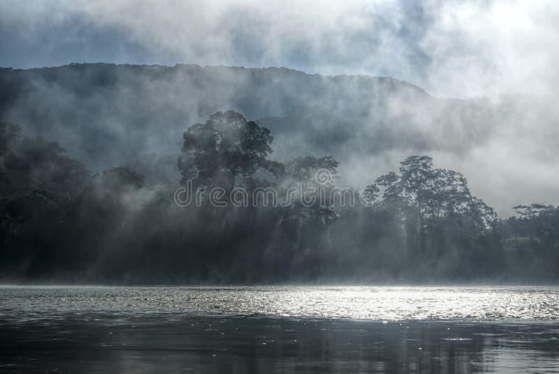Niebla en selva foto de archivo libre de regalías