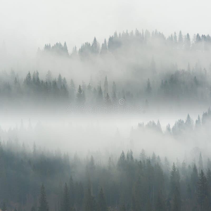 Niebla hermosa en bosque fotos de archivo