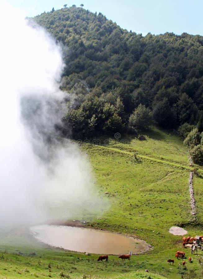 Niebla inminente a las vacas que pastan en las montañas foto de archivo