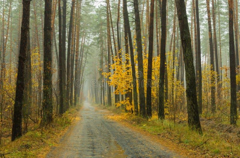 Niebla, lluvia y bosque fotos de archivo libres de regalías