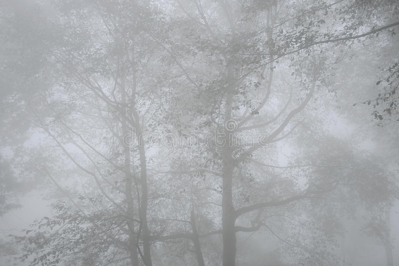 Niebla occidental del ghats-invierno fotos de archivo libres de regalías