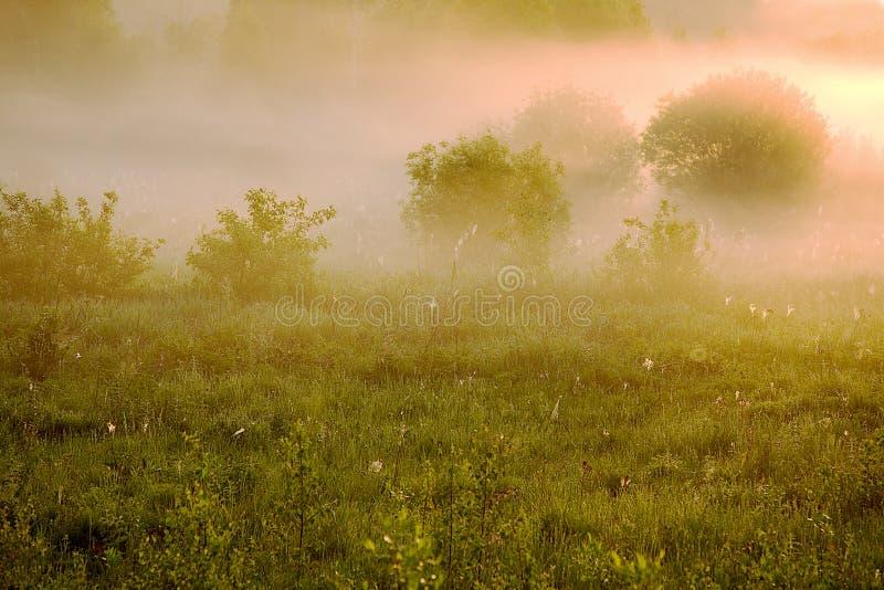 Niebla rosada imagen de archivo libre de regalías