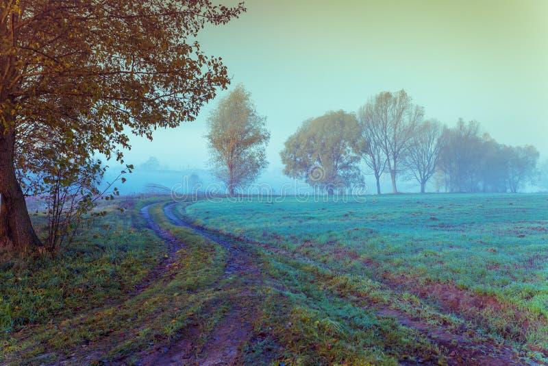 Niebla sobre el campo en la madrugada foto de archivo libre de regalías