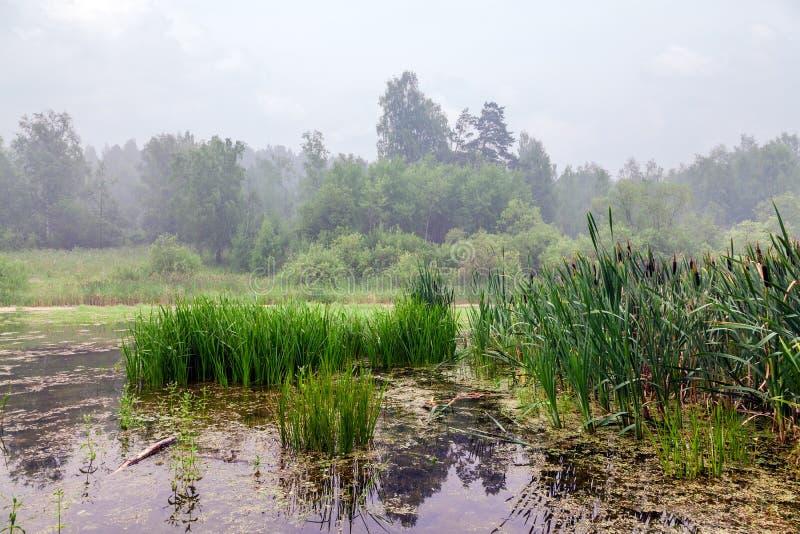 Niebla sobre el lago del bosque foto de archivo libre de regalías