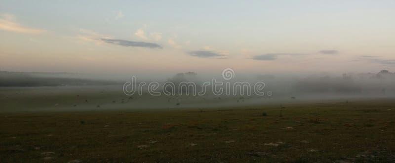 Niebla sobre el pasto fotografía de archivo libre de regalías