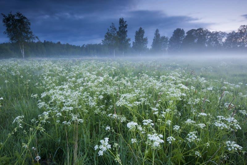 Download Niebla sobre el prado foto de archivo. Imagen de suecia - 42435520