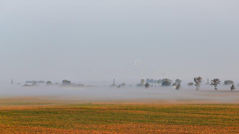 Download Niebla Sobre Un Campo De Oro De La Soja Imagen de archivo - Imagen de planta, mañana: 100532689