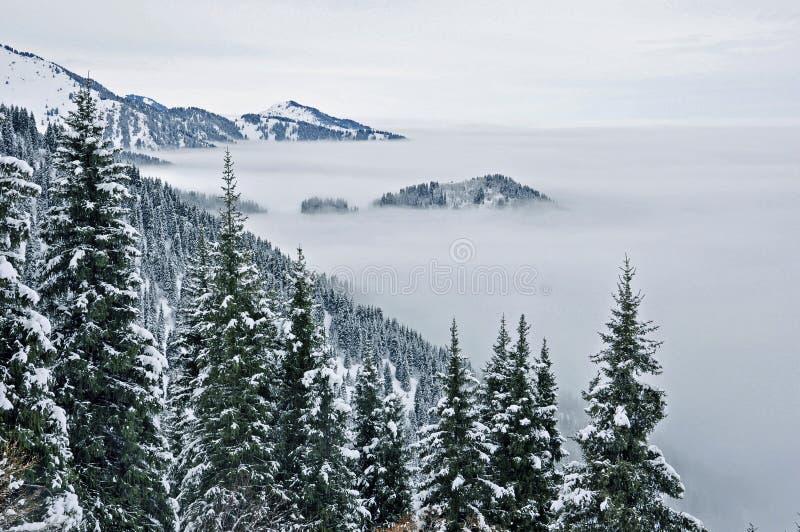 Niebla y bosque en Tien Shan del norte imagen de archivo