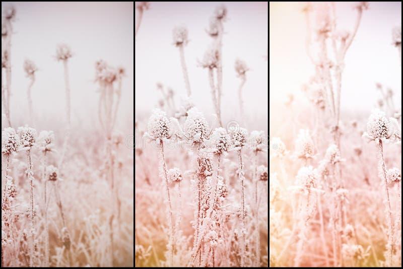 Niebla y helada en el prado - escarcha de la mañana en el cardo, foco suave en el cardo de la helada, bardana imagen de archivo
