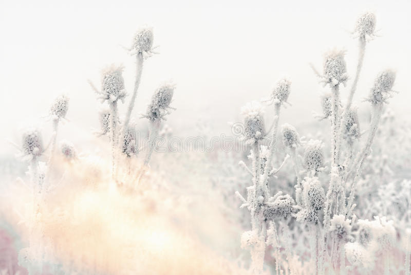 Niebla y helada en el prado - escarcha de la mañana en cardo fotografía de archivo libre de regalías