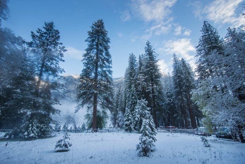 Niebla y nieve en árboles y acantilados del parque nacional de Yosemite, California en invierno durante salida del sol fotografía de archivo libre de regalías