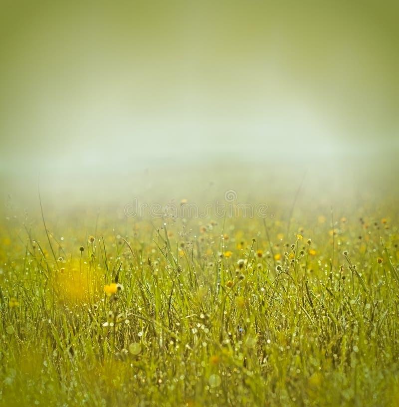 Niebla y rocío de la mañana en hierba y flores foto de archivo libre de regalías