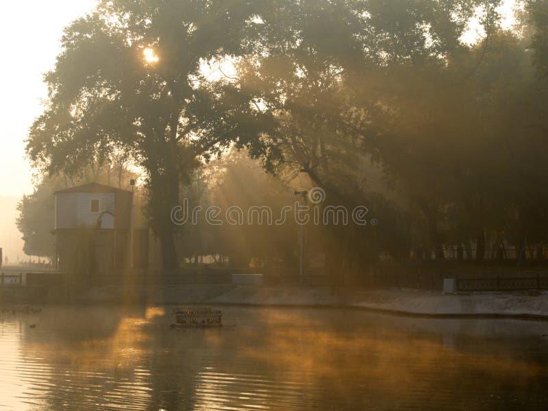 Niebla y sol de la mañana foto de archivo