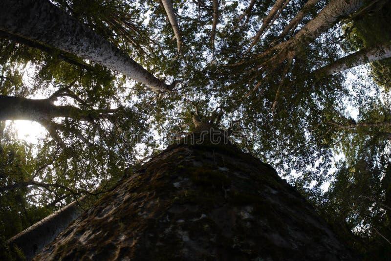 Niebo drzewa zdjęcia royalty free