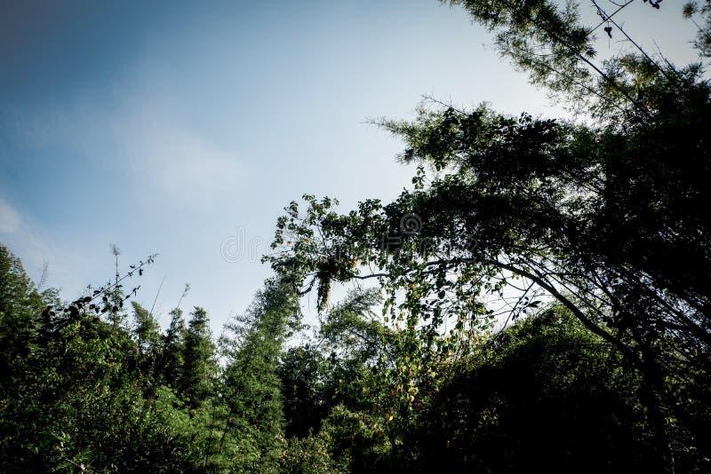 Niebo & drzewo fotografia stock
