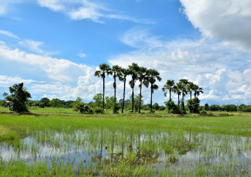 Download Niebo i tajlandzki kraj zdjęcie stock. Obraz złożonej z miejscowy - 41952592