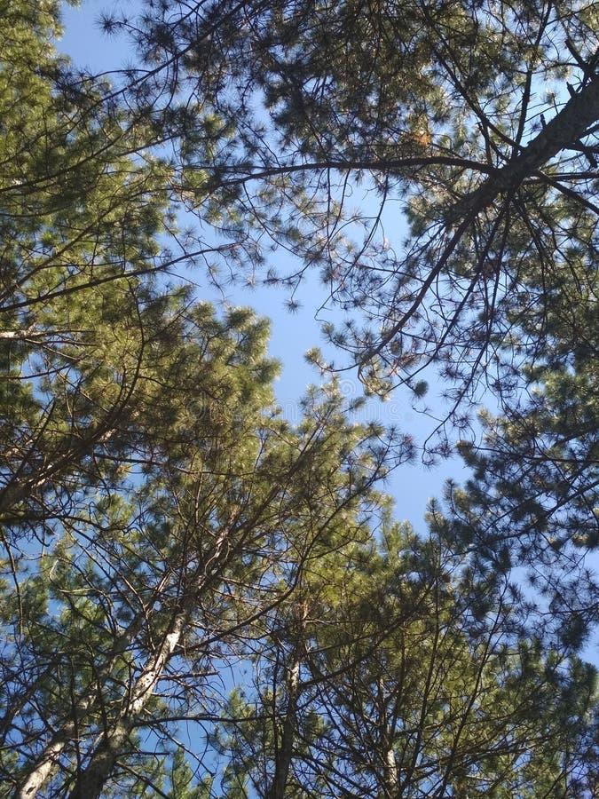 Niebo i ziele? obraz stock