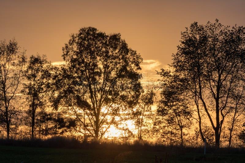 Niebo, natura, drzewo, ?wit zdjęcie royalty free