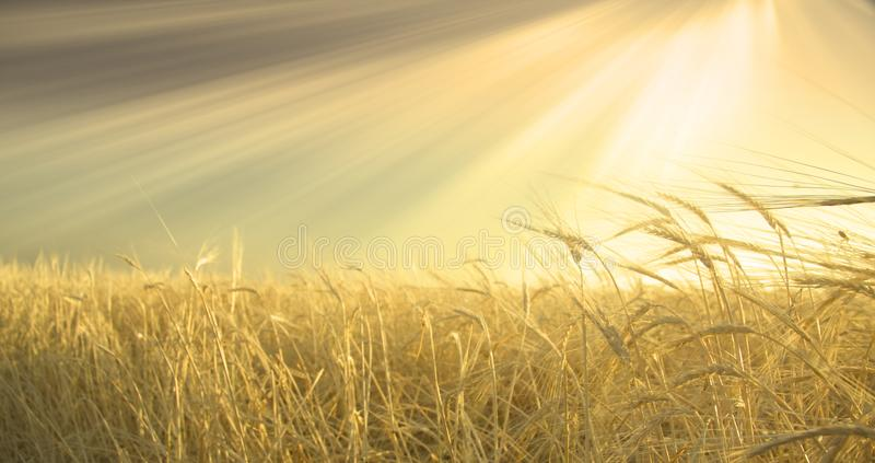 niebo pola sunny zdjęcie stock