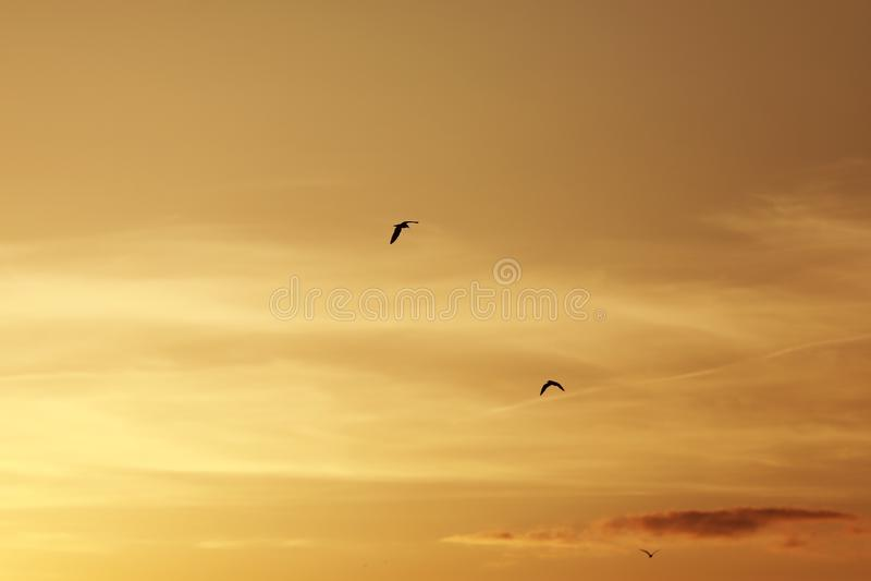 Niebo przed zachodem słońca, ptaki na niebie ptaki latające w tle na zachód słońca i zmierzchu obrazy stock