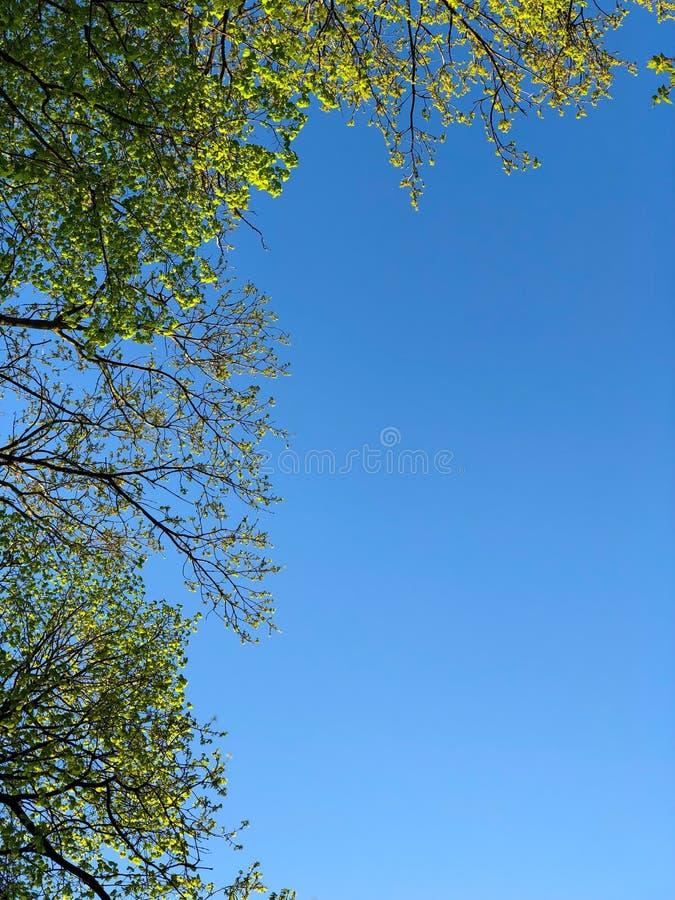 niebo przez drzew w zdjęcie stock