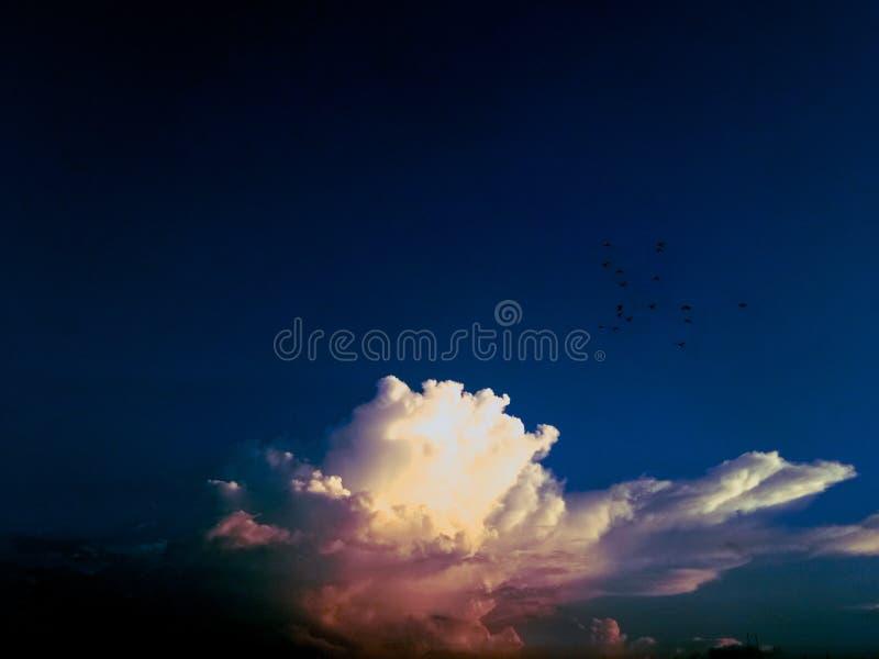 niebo & ptaki obrazy stock