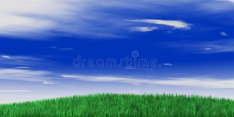 niebo trawy