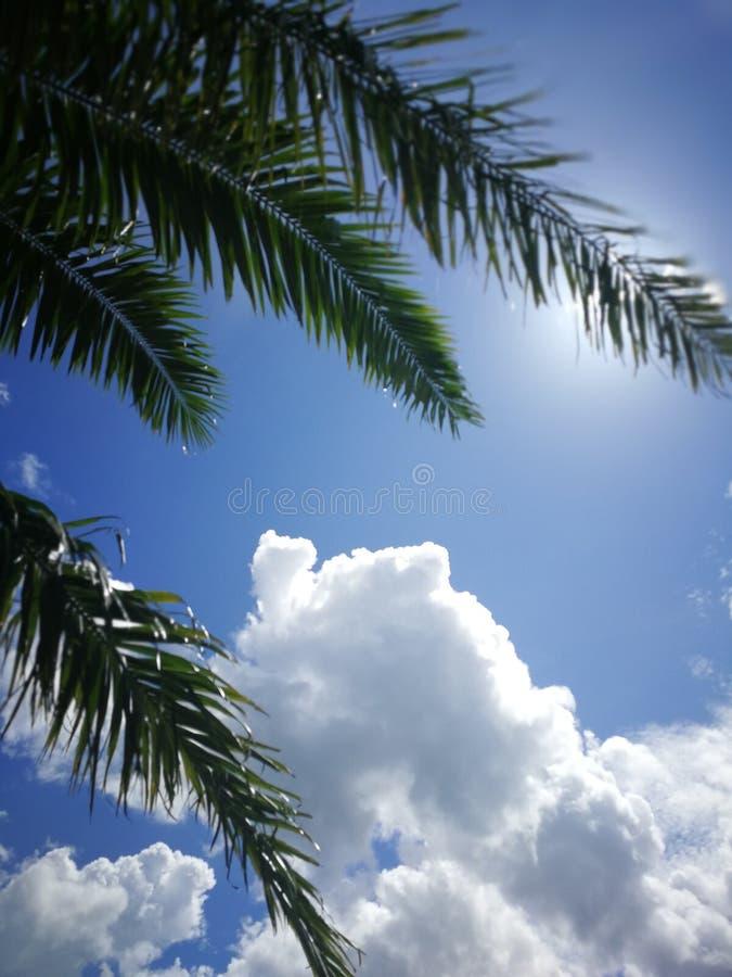 Niebo w lecie zdjęcie royalty free