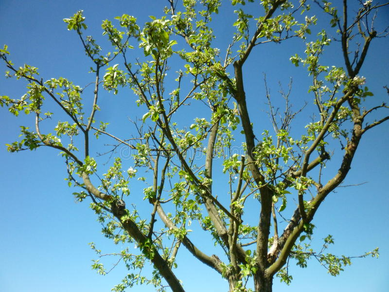 Niebo z drzewem zdjęcia royalty free